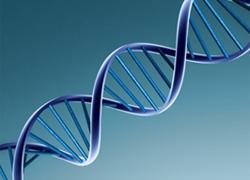 Ραντεβού γενετική